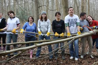 Volunteers in woodland
