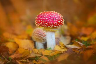 photography: fungi and autumn