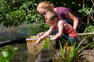 Pond Dipping at Bay Pond, Godstone