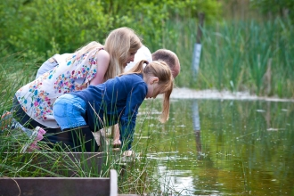 Pond dipping at Bay Pond