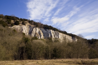 Brockham Chalk Cliff