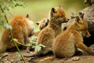 Become a member | Surrey Wildlife Trust