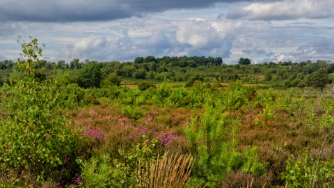 Chobham Common