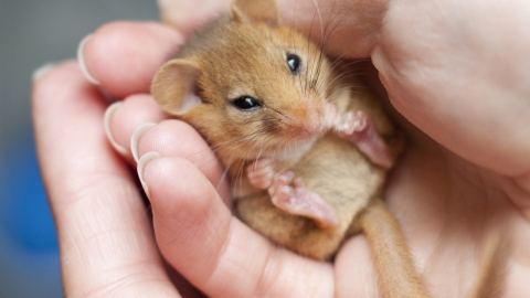 Dormice & Dormice | Surrey Wildlife Trust