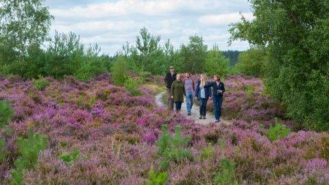 guided walk on heathland