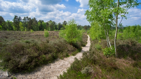 Ockham Common