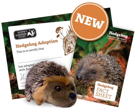 SWT Hedgehog Adoption
