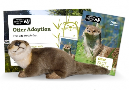 SWT Otter Adoption