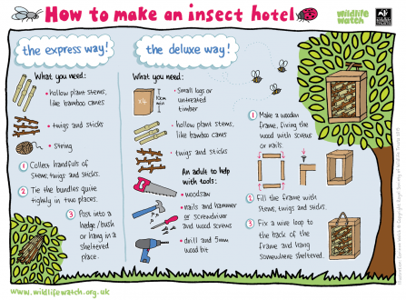 Make an insect hotel