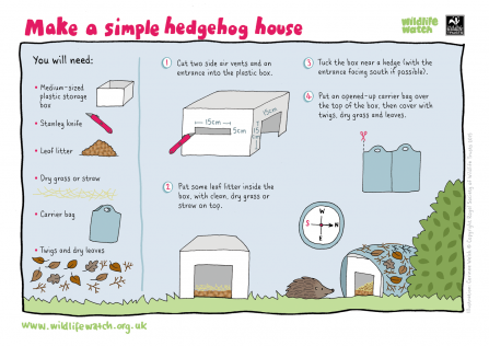 Make a hedgehog home