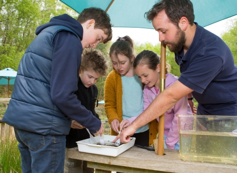 Pond dipping discovery