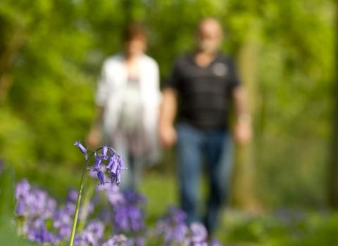 Couple walking in bluebell wood