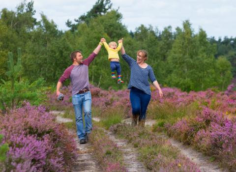 Family walk on a Surrey heathland